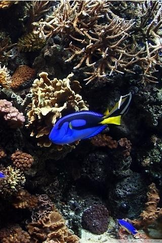 Image 2 Of Aquarium 3D Live Wallpaper HD For Android