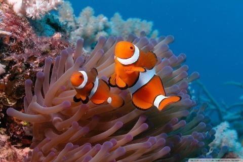 Image 3 Of Aquarium 3D Live Wallpaper HD For Android