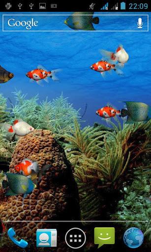 Live aquarium screensaver for Android - Free Download