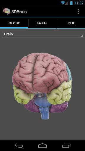 3d brain for android free download